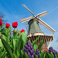 PORT SPOTLIGHT | Amsterdam, The Netherlands | Tulip Time